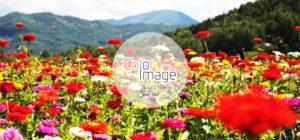色の与えるイメージ一覧 〜与えたいイメージに合致した色選び〜